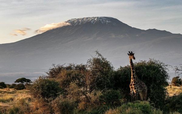Jak wspiąć się na Kilimandżaro i zdobyć najwyższy szczyt Afryki? – rozmowa z Tomaszem Kobielskim