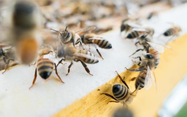 Ratujmy pszczoły! – 5 domowych sposobów, by pomóc pszczołom